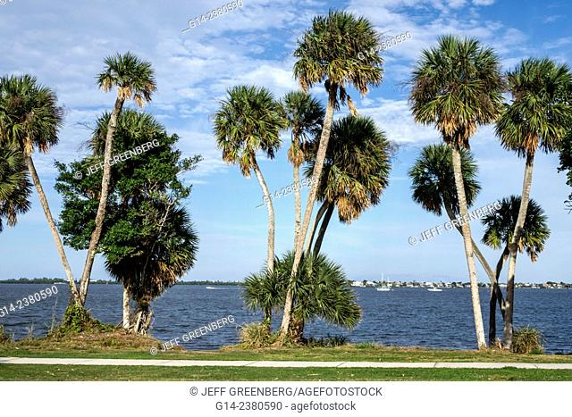Florida, Jensen Beach, Indian River Lagoon, cabbage sabal palm trees, water
