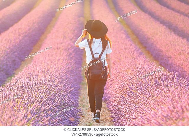 Europe, France,Provence Alpes Cote d'Azur,Plateau de Valensole. Girl in lavender field