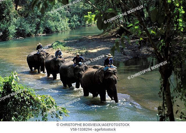 ELEPHANTS, MAE PING RIVER, CHIANG MAI REGION, THAILAND