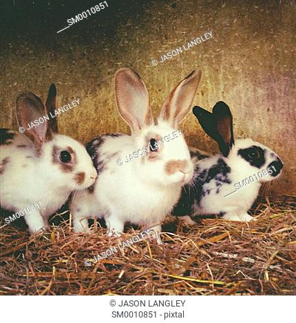Young rabbits in cage