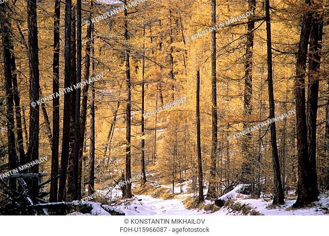 East Siberia, Eatern Siberia, Siberia, autumn, fall, forest, landscape