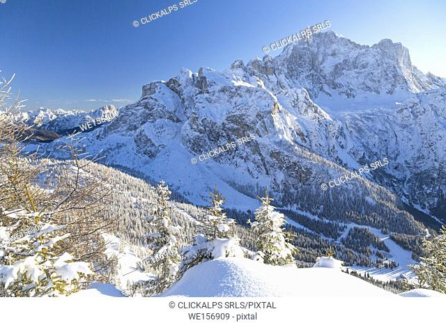 View of the high peak of Monte Civetta framed by snowy woods from Mount Fertazza in winter Dolomites Province of Belluno Veneto Italy Europe