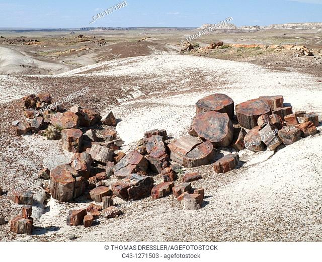 USA - Logs of petrified wood at the Crystal Forest  When breaking into segments millions of years ago, the crystal nature of the quartz created clean fractures...