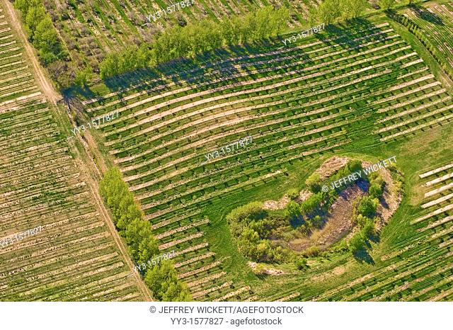 Aerial view of farm fields and orchards in Michigan, USA