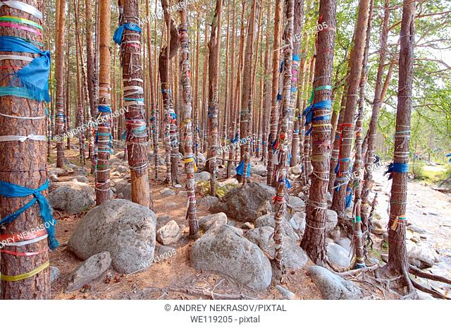 sacred grove, Arshan, Tunkinsky District, Republic of Buryatia, Siberia, Russian Federation