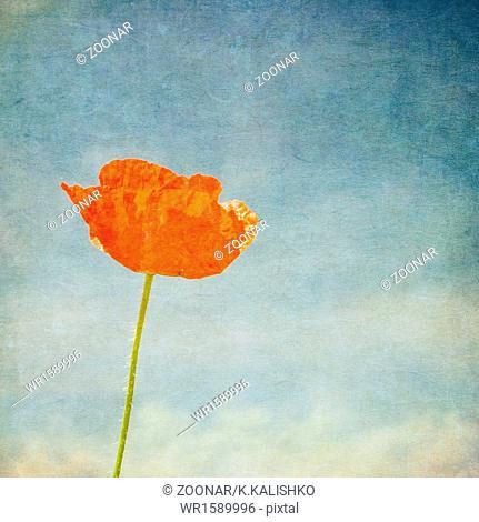 Vintage image of poppy