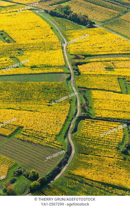 France, Bas Rhin 67, Wines road, Rosheim, vineyards in autumn aerial view
