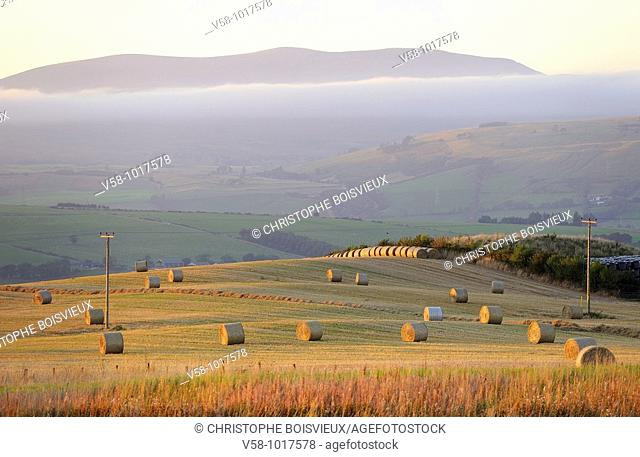 Harvested fields. Dingwall region. Scotland. Great Britain
