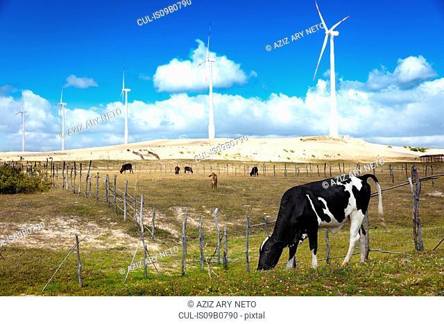 Wind farm, Taiba, Cearß, Brazil