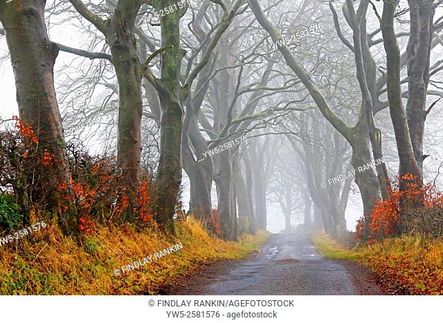 Country road with an avenue of bare trees in the winter, Scotland, UK