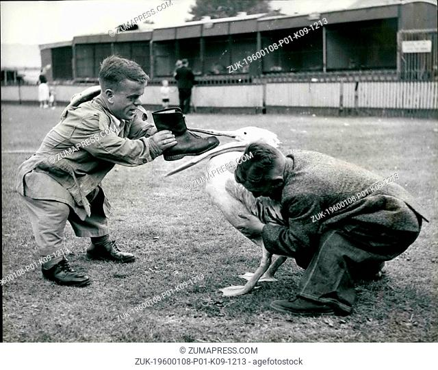 1958 - Peter Nearly gets the boot.: peter is a very fine pelican who regularly perform at the great Chipperfield Circus, now appearing for the first time on...