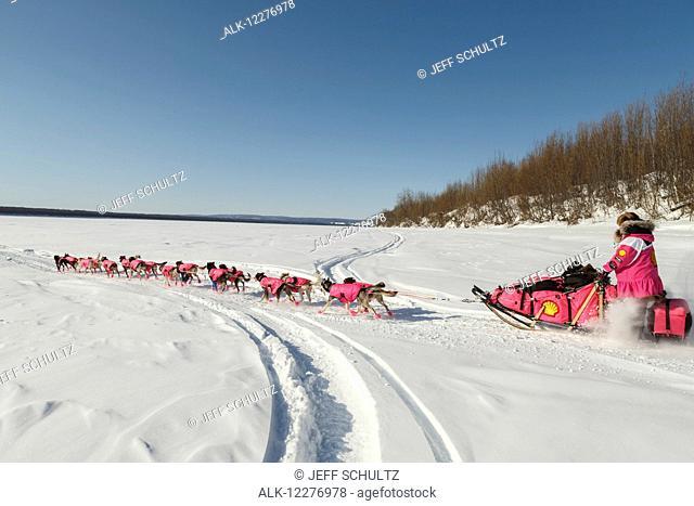 DeeDee Jonrowe runs down the bank and onto the Koyukuk river as she leaves the Koyukuk checkpoint during Iditarod 2015