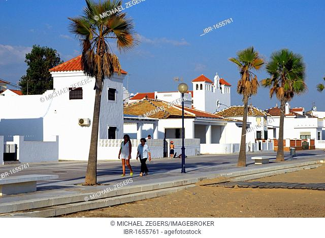 Promenade with palm trees, beach, La Antilla, Lepe, Costa de la Luz, Huelva region, Andalucia, Spain, Europe