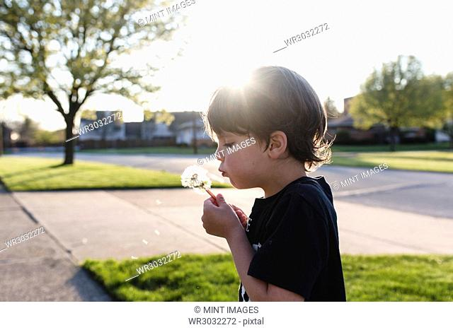 Boy with brown hair standing outdoors on a pavement, holding dandelion, blowing on spores