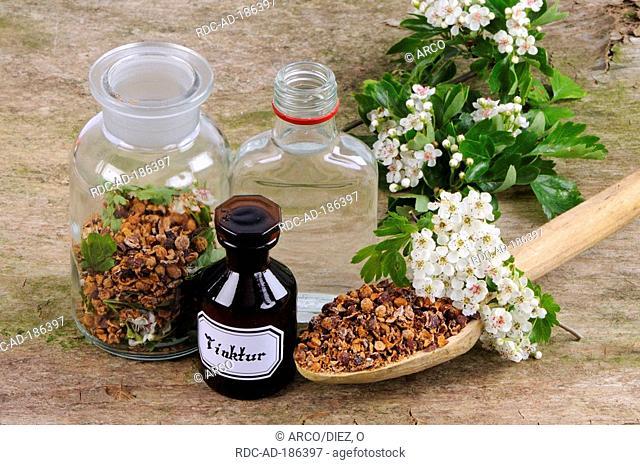 Ingredients for Hawthorn tincture, Crataegus monogyna