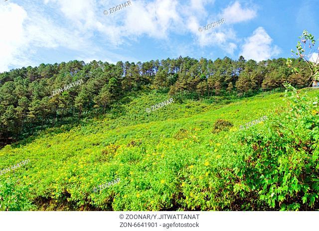 Scenic nature Doi Mae Uko mountain