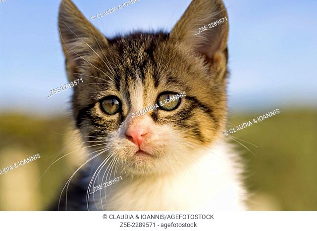 Portrait of a kitten against blue sky