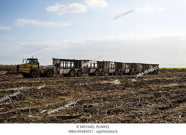 Huge sugarcane truck in the sugar fields, Malawi, Africa