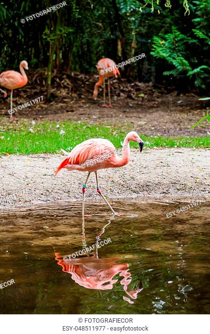 Group of flamingos in the zoo