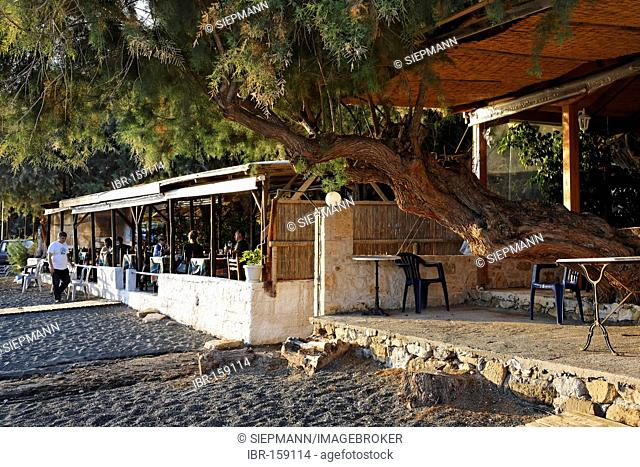 Tavern with tamarisk in Tertsa, Southern Crete, Greece
