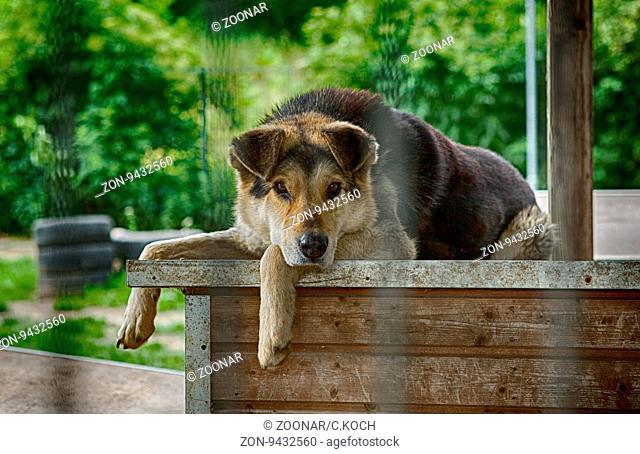 Ein Hund liegt traurig auf seiner Hundehütte in einem Tierheim, 2016. Beim Kauf dieses Bildes geht 80% als Spende an das Tierheim