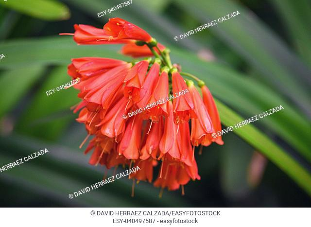 Beautiful red color tropical flower on green natural background
