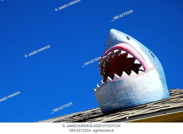 A shark humorously breaks through the roof at an arcade