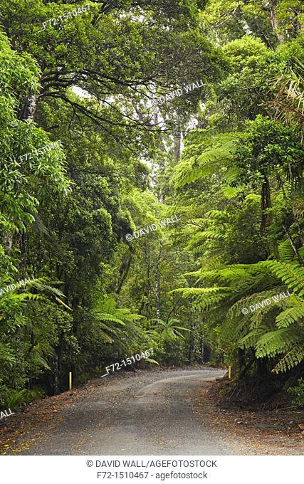Gravel road winding through native bush of Puketi Forest