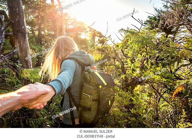Female hiker leading boyfriend through forest, Pacific Rim National Park, Vancouver Island, British Columbia, Canada
