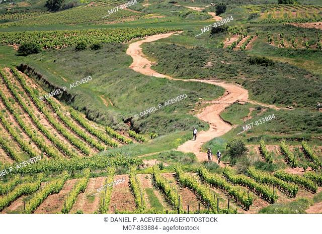 Camino de Santiago through vineyards in La Rioja