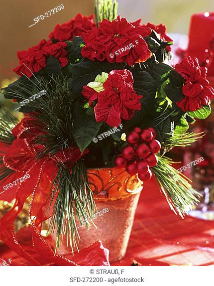 Red poinsettia Not available in FR