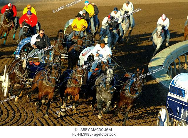 The Chuckwagon races, Calgary Stampede, Calgary, Alberta