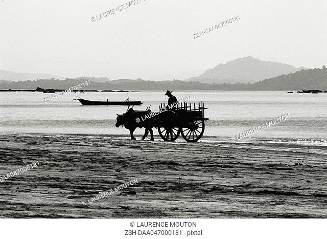 Myanmar Burma, Ngapali beach ox cart