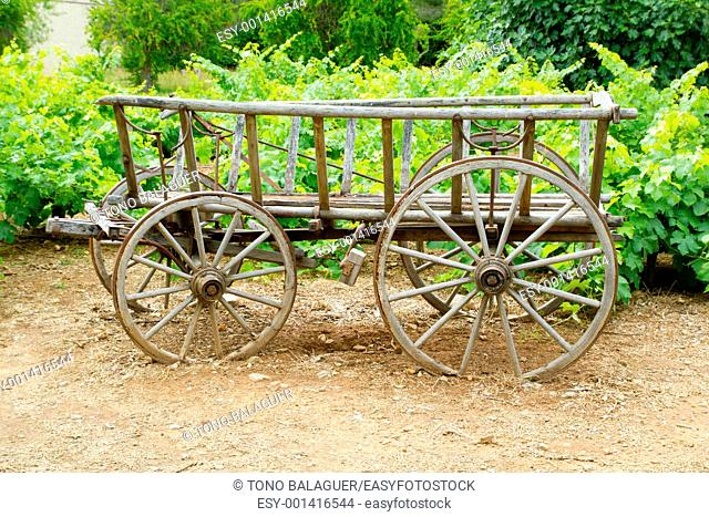Wine old wood horses cart in grape plants field