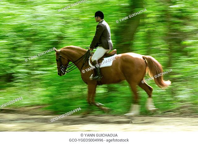 Equitation in Compiegne's forest, Oise,Picardy,France
