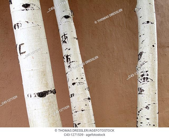 USA - Detail of trunks of birch trees at a adobe façade in Santa Fe  New Mexico, USA