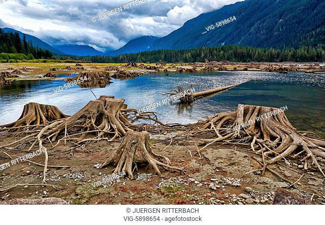 Buttle Lake in Strathcona Provincial Park, Vancouver Island, British Columbia, Canada - Vancouver Island, British Columbia, Canada, 19/09/2014