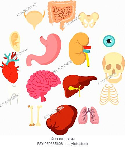 Human organs set icons in flat style isolated on white background