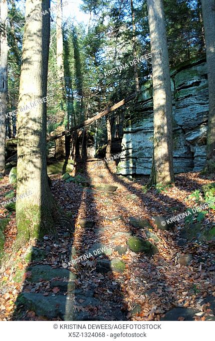 Evening light casts shadows across the forest along the Ledges Trail in the Cuyahoga Valley