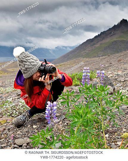 Teenage girl taking pictures of lupines in Iceland Area by Svinafellsjokull Glacier, Vatnajokull Ice Cap, Iceland