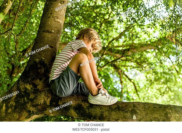 Little boy sitting on a tree in the forest