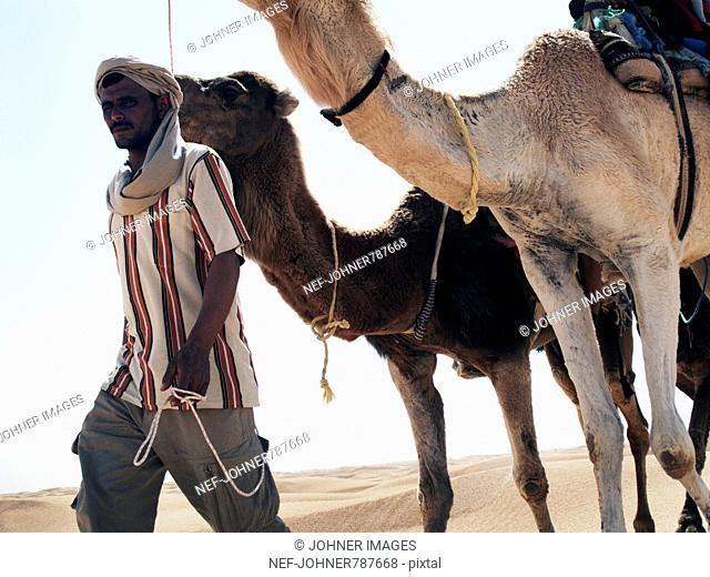 A Bedouin walking with dromedaries, Tunisia