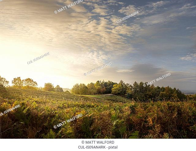 View of bracken and hills at sunrise