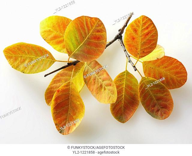 Fallen Autumn Leaf - Brightly coloured laeves
