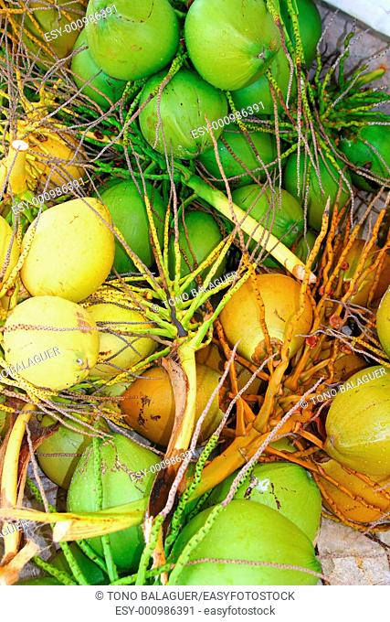 Coconuts fresh crop harvest green and yellow in Caribbean