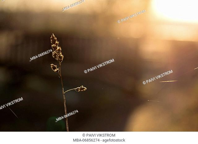 Dried plant in sunlight back light, brown background with bokeh