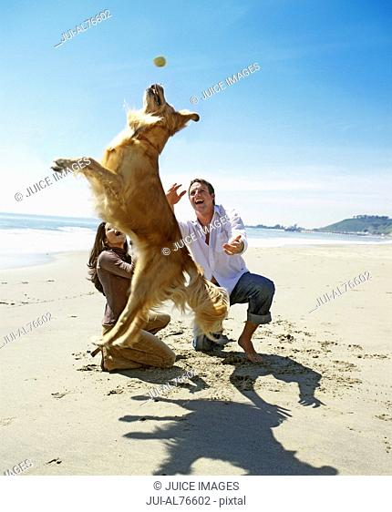 View of a coupe playing with golden retriever on the beach
