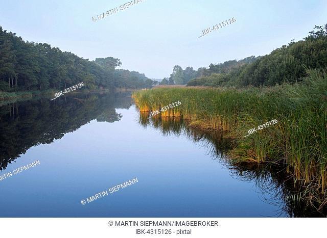 Prerower Strom, current on river Prerow, morning mist, Darß, Fischland-Darß-Zingst, Western Pomerania Lagoon Area National Park, Mecklenburg-Western Pomerania