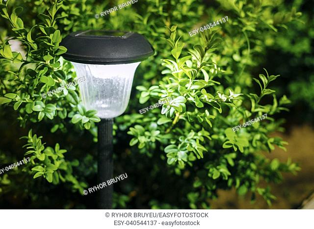 Decorative Small Solar Garden Light, Lanterns In Flower Bed In Green Foliage. Garden Design. Solar Powered Lamp