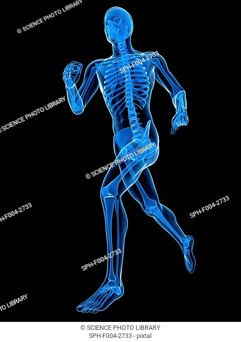 Running skeleton, computer artwork